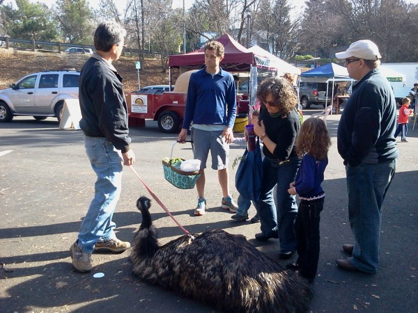 Bedrock Emu Works at a Farmers' Market
